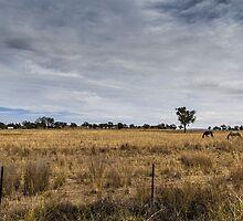 Horses, Manilla NSW by Daniel Rankmore