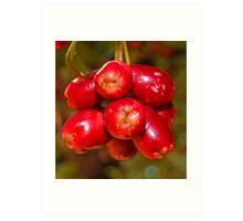 Red Berry Art Print
