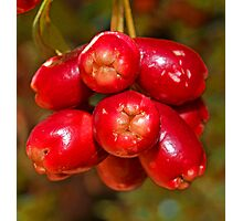 Red Berry Photographic Print