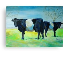 Belted Galloway Cows Painting Canvas Print