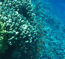 Reef at the Red Sea by Shellie Phipps