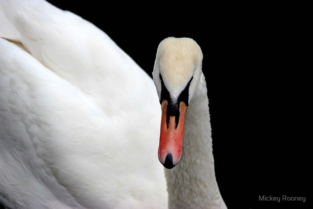 Swan  by Mickey Rooney