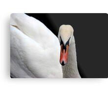 Swan  Metal Print