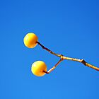 Yellow Berries by Mickey Rooney