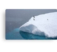 Snow storm, freezing wind ~ Life in the Antarctic goes on!! Canvas Print