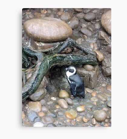 The Penguins Home Canvas Print