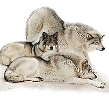 Lazy Day Wolves by Rudy Pohl
