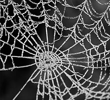 Frosty Spiders Web by Mickey Rooney