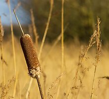 Bulrushes in the long grass by Paul Madden
