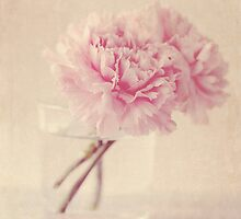 Textured Carnations by Nicola  Pearson