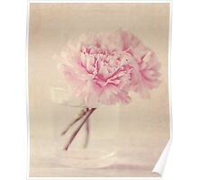 Textured Carnations Poster