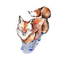 Fox in Socks Photographic Print