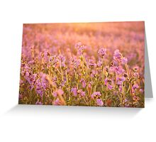 Symphony in Pink Greeting Card