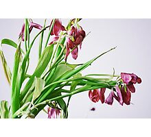 Melancholia: Withering Lilies Photographic Print