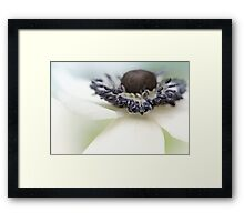 Gorgeous Anemone.... Framed Print