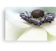 Gorgeous Anemone.... Canvas Print