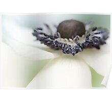 Gorgeous Anemone.... Poster