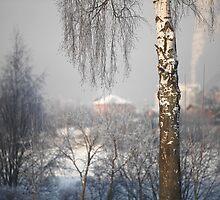 winter Landscape by mrivserg