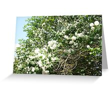 Flower Bush Greeting Card
