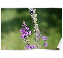 Macro Purple Flowers Poster