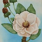 White Magnolia #1 by Jewel  Charsley