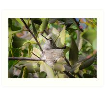 """Costa""""s Hummingbird on Nest Art Print"""