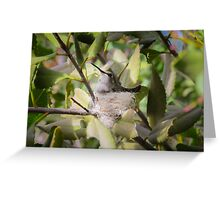 "Costa""s Hummingbird on Nest Greeting Card"