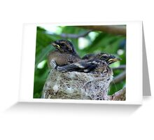 Grey fantail chicks Greeting Card