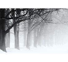 Black Limbs Photographic Print