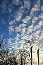 Evening Sky by NatureGreeting Cards ©ccwri