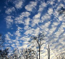 Evening Sky 0090 by NatureGreeting Cards ©ccwri