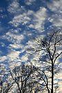 Evening Sky 0092 by NatureGreeting Cards ©ccwri