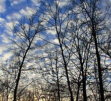 Evening Sky 0095 by NatureGreeting Cards ©ccwri