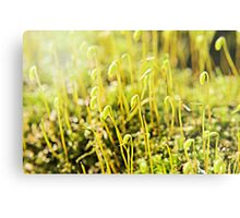 The Macro Forest Metal Print