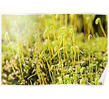 The Macro Forest Poster