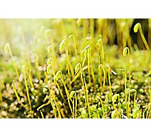 The Macro Forest Photographic Print