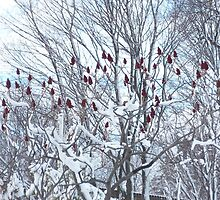 Red Winter Berries by zzaannsebar