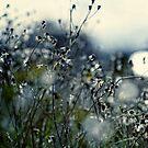In Silence by Beata  Czyzowska Young