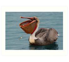 Feasting Brown Pelican  Art Print