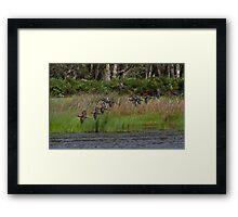 Ibis Flock Framed Print