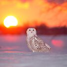 Sunset in Ottawa by jamesmcdonald