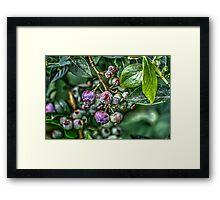 In The Garden #3 Framed Print