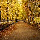 Schonbrunn Palace Gardens - Vienna by Robyn Carter