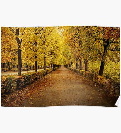 Schonbrunn Palace Gardens - Vienna Poster