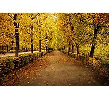 Schonbrunn Palace Gardens - Vienna Photographic Print