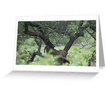 Kruger Park South Africa Greeting Card