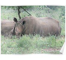 Kruger Park South Africa Poster