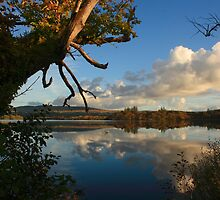 Lough Eske Shore by Adrian McGlynn