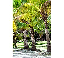 Coconut tree Photographic Print