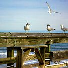 Seagulls at the Beach and on the Pier by imagetj